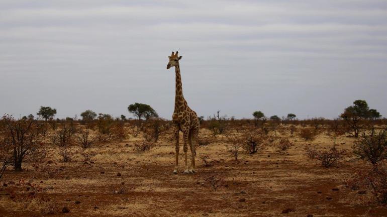 safari 9