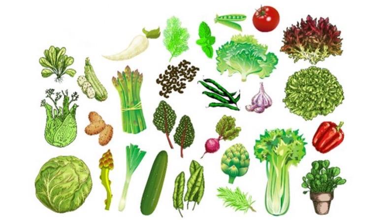 dieta di primavera 1